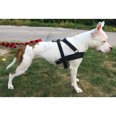 Harness PITT with side draw